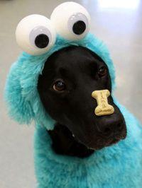 Best 20+ Halloween costumes 2014 ideas on Pinterest ...