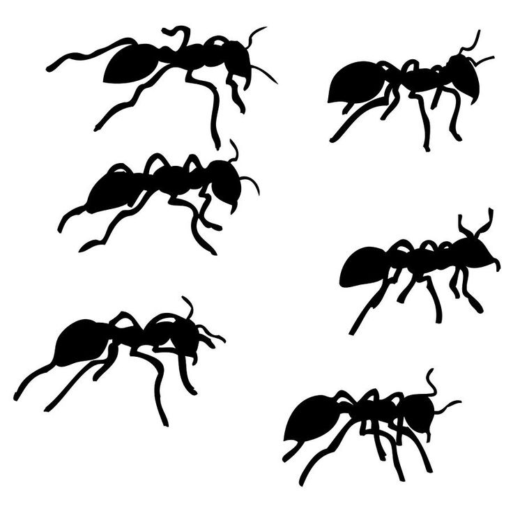 17 Best images about ANT Patterns & Illustrations on