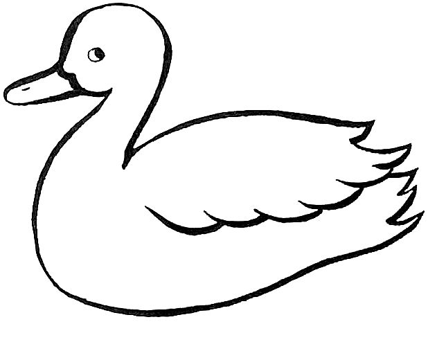 38 best images about ducks on Pinterest