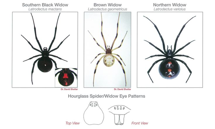Top 25 ideas about Creepy Crawly Identification on