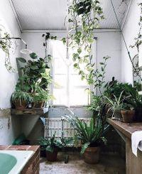 25+ best ideas about Bathroom plants on Pinterest | Plants ...