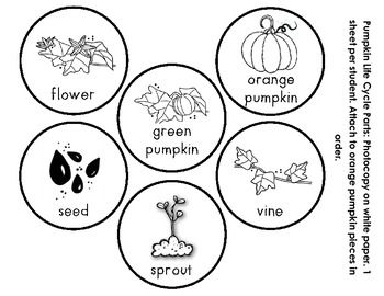 Pumpkin Life Cycle Coloring Pages Printable Sketch