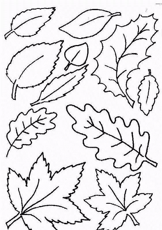 molde+folha+uva+moldes+folhas+colorir+pintar+5.gif (562