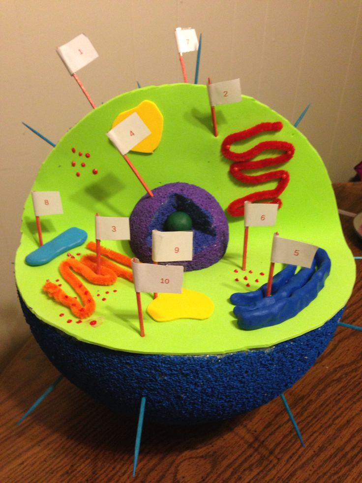 Animal Cell Animal Cell Model Diagram Project Parts Structure Labeled