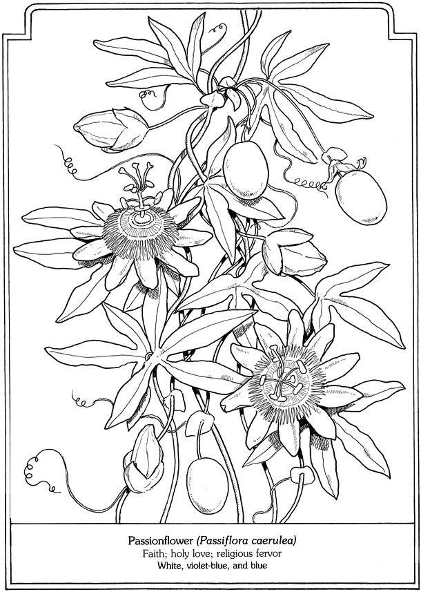 Kleurplaat passiebloem Welcome to Dover Publications