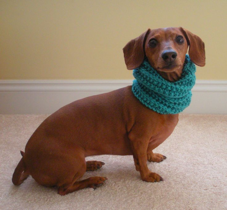 Dog neck warmer knit cowl pdf pattern small medium and