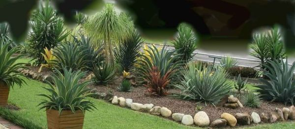 agave plant landscaping yucca
