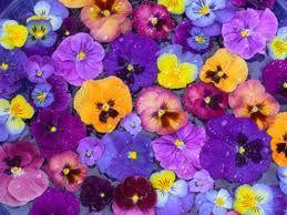 art pansies & carnations