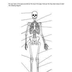 Heart Anatomy Diagram Worksheet Bmw Wiring Legend Appendicular Skeleton Labeling | & Workbook Site Physiology Pinterest ...
