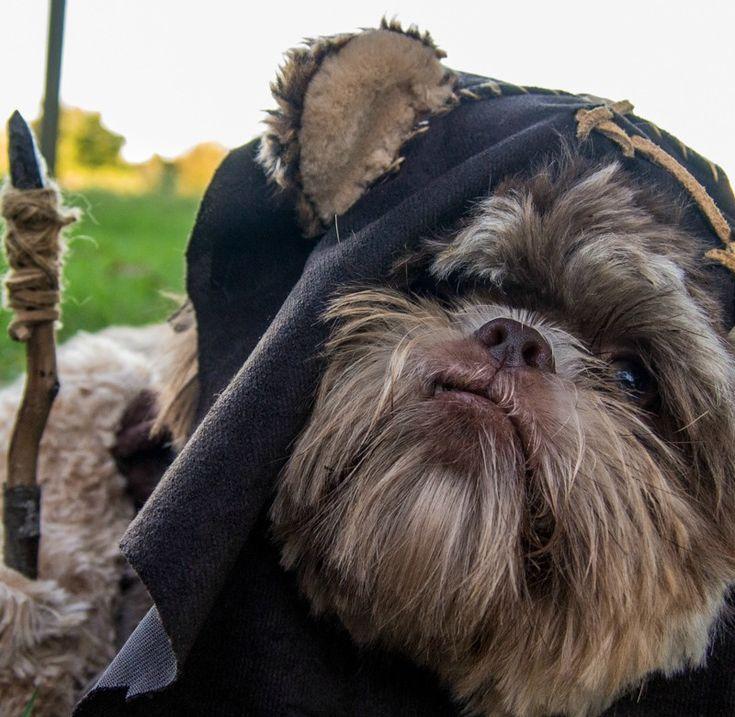 25+ best ideas about Ewok dog costume on Pinterest