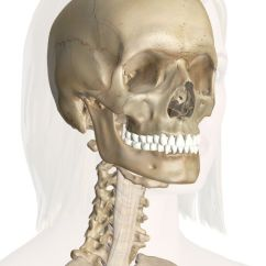 Anatomy Skull Diagram Top Pick Up Wiring Bones Of The Head And Neck   Good To Know Pinterest Neck,