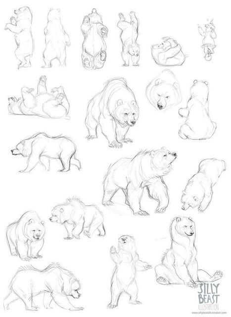 884 best images about Bear Illustrations on Pinterest