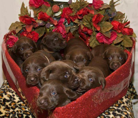 A Box of Chocolates! Omg this is too adorable!