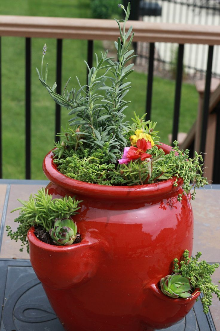 1357 Best Images About Container Garden Ideas On Pinterest