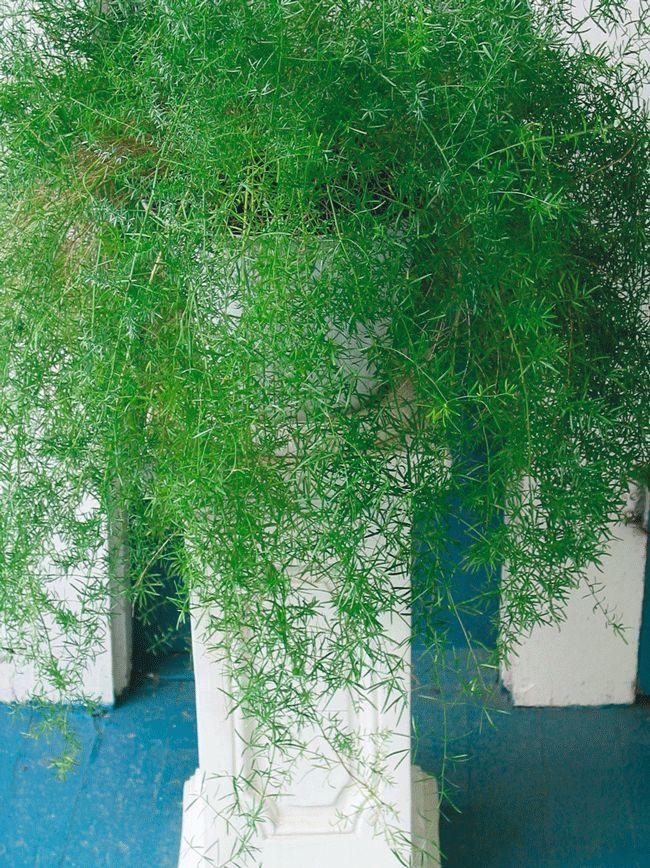 Best Indoor Hanging House Plants