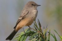 1000+ images about Chandler,Az backyard birds on Pinterest ...
