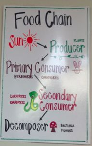 This is a great food chain anchor chart, that could easily be simplified for lower