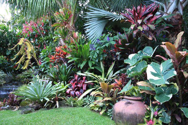 Dennis Hundscheidt Tropical Garden  Sunnybank Qld  Garden  Pinterest  Gardens Outdoor