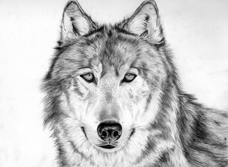 1000+ Images About Awesome Drawings On Pinterest  Ileana
