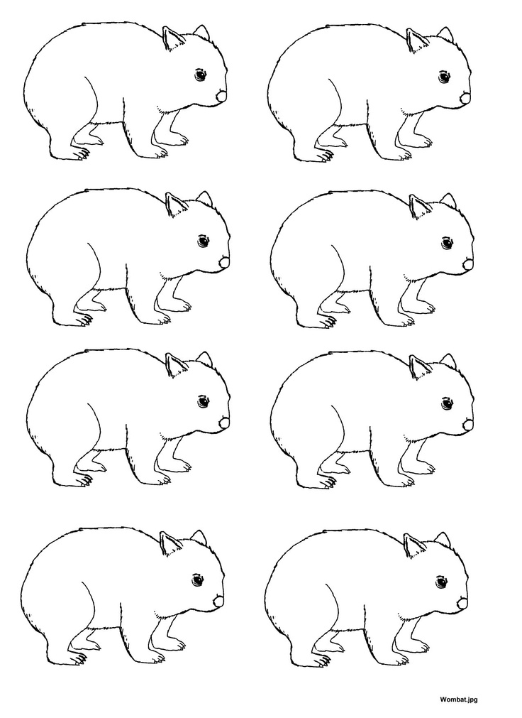 1000+ images about Wombat Storytime on Pinterest