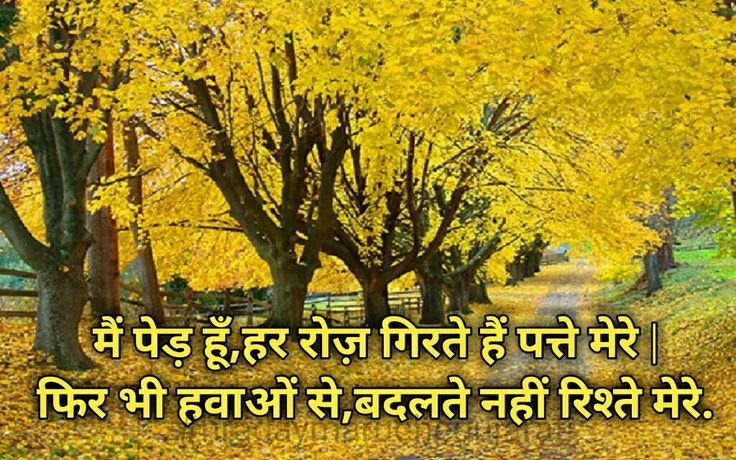 True Love Quotes Wallpaper In Hindi 704 Best Images About Hindi Quotes On Pinterest Quotes