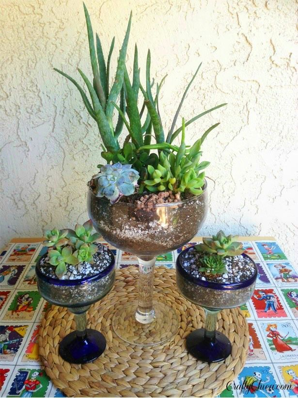 23 Best Images About Plants On Pinterest Gardens Awesome And Cactus
