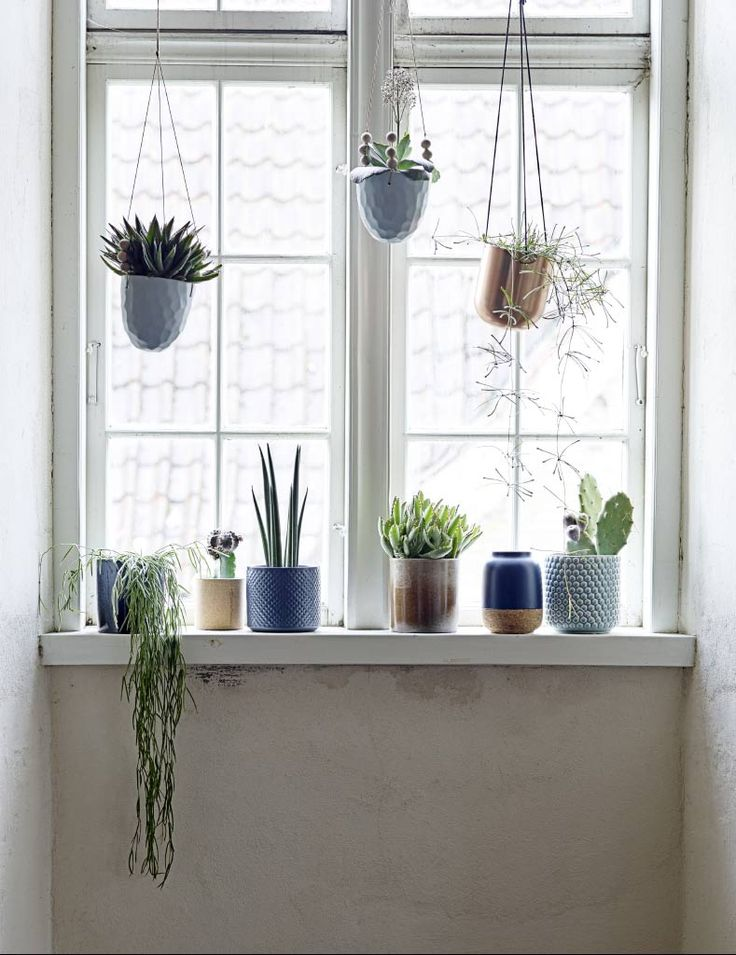 25 best ideas about Window sill decor on Pinterest  Window plants Indoor succulents and