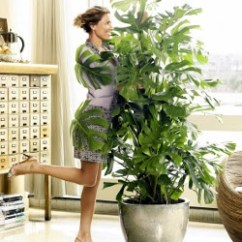 Grey And Yellow Living Room Decorating Ideas Luxury Furniture Uk 17 Best Images About Plants In The On ...