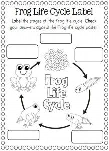 17 Best images about Life cycle craft and coloring page on