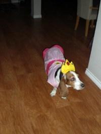 Bailey the Basset Hound as Princess Peach! | Pets ...