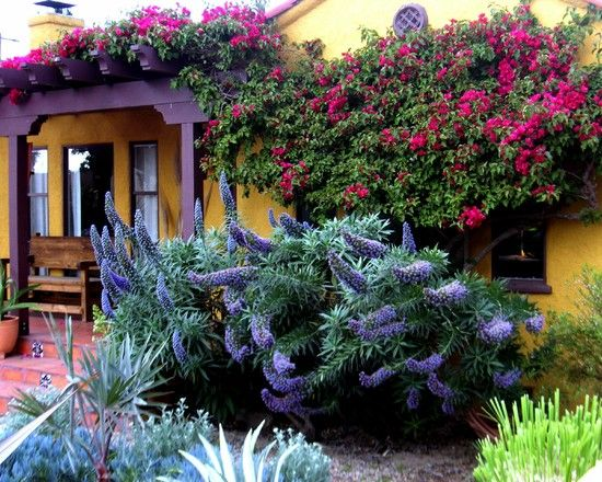 25 Best Ideas About Drought Tolerant Garden On Pinterest