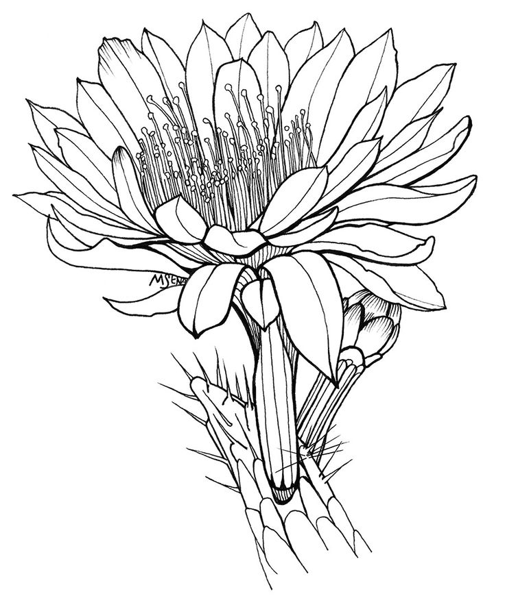 Meaning Of Night Blooming Cereus Flowers