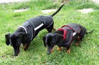 25 Best images about Extra Warm Winter Dog Coats by ...