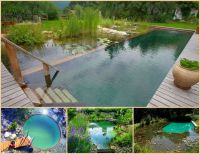 1000+ images about Natural Swimming Ponds on Pinterest ...