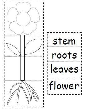 Have students cut and paste to create a plant flip book