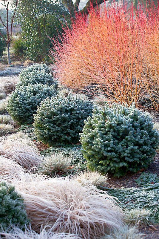 25 Best Ideas About Winter Garden On Pinterest Winter Vegetable