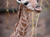 17 Best images about Endangered Animals Unit on Pinterest ...