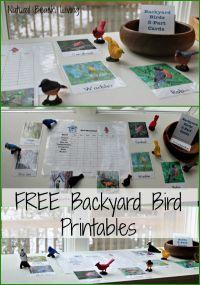 17 Best images about Unit: Birds on Pinterest | Montessori ...