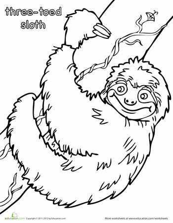 Sloths, Worksheets and Coloring pages on Pinterest