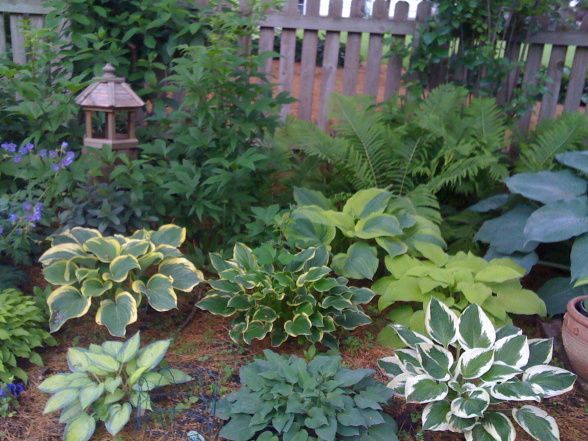 25 Best Ideas About Hosta Gardens On Pinterest Shade