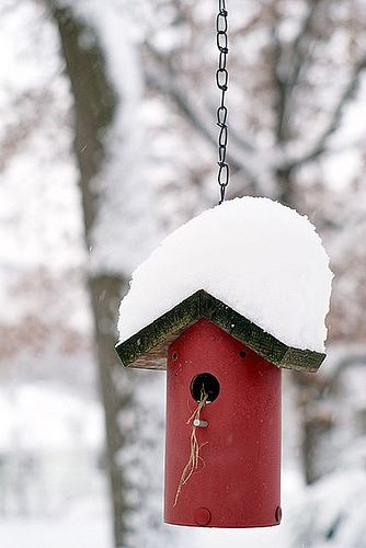 17 Best images about bird houses on Pinterest  Gardens