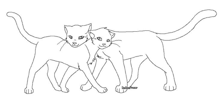 Warrior Cats Tom And She