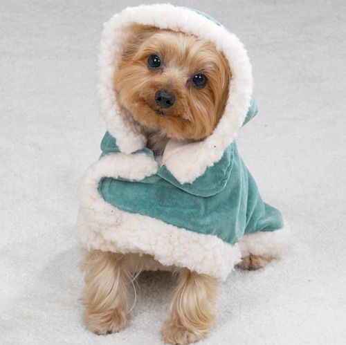 25+ best ideas about Cute dog clothes on Pinterest