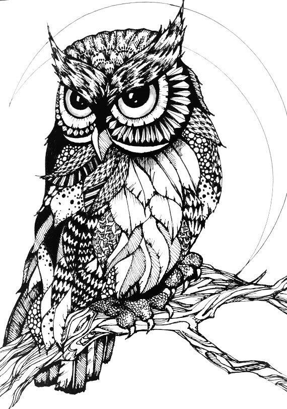 1174 best images about Ö Adult Colouring~Owls~Birds