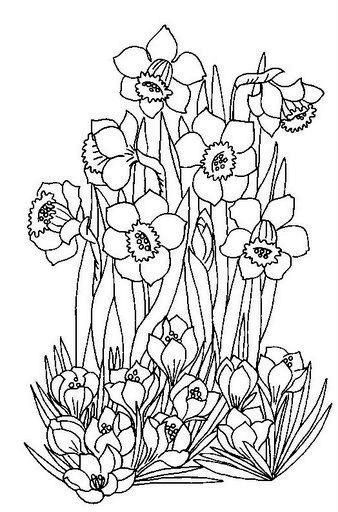 126 best images about Flowers drawing of daffodil on