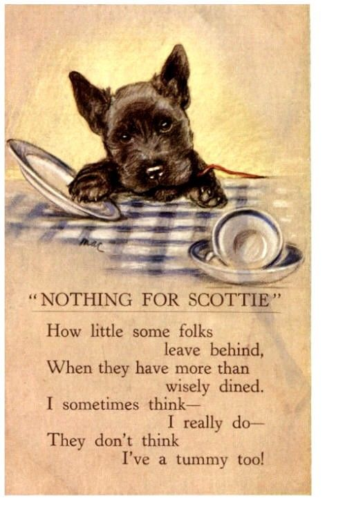 Nothing For Scottie Vintage Postcard Dog Scottish Terrier