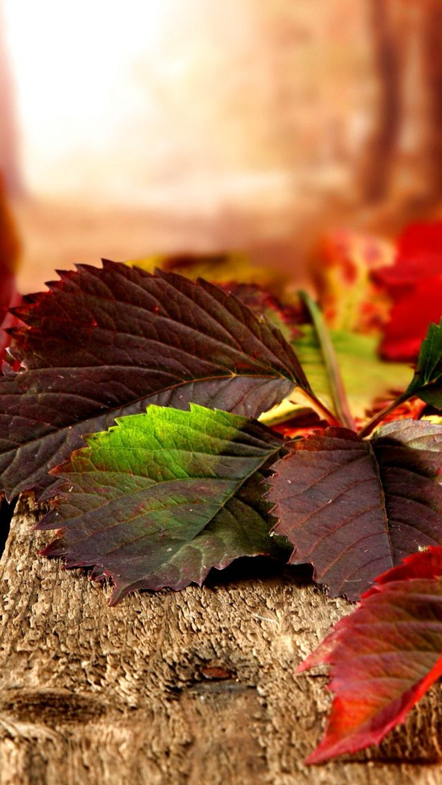 Iphone Se Fall Colors Wallpaper 25 Best Ideas About Autumn Iphone Wallpaper On Pinterest