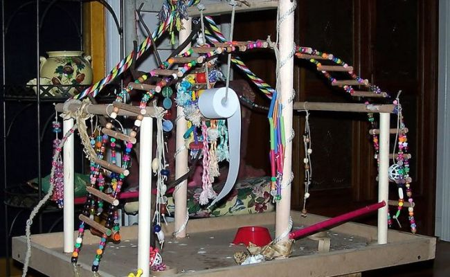 82 Best Images About Diy Bird Stands Play Gyms On
