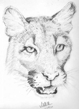 pencil simple drawings sketches wildlife sketching ver imagenes animal venezuela cell