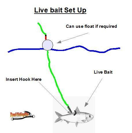 17 Best images about Fishing Tackle and Tips on Pinterest
